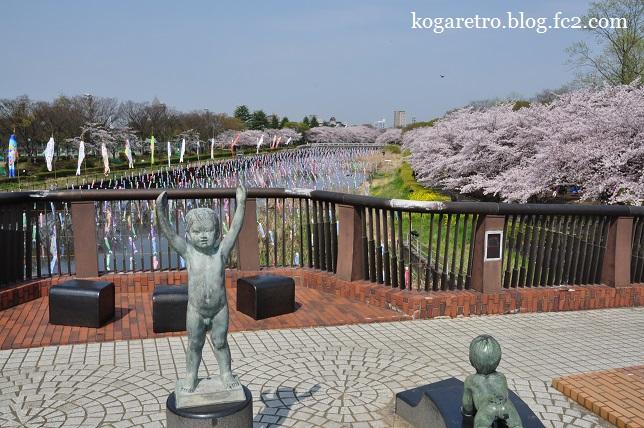 2016館林の桜とこいのぼり4