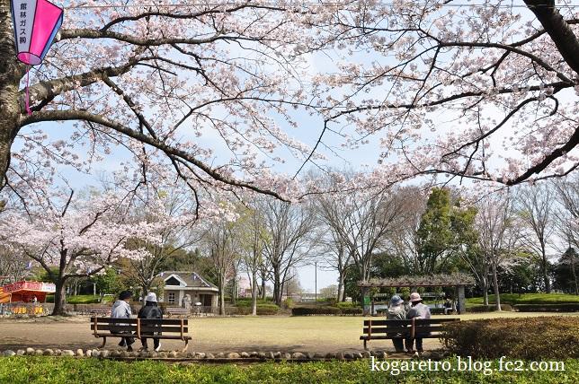 2016館林の桜とこいのぼり7