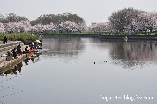 群馬の水郷の桜4