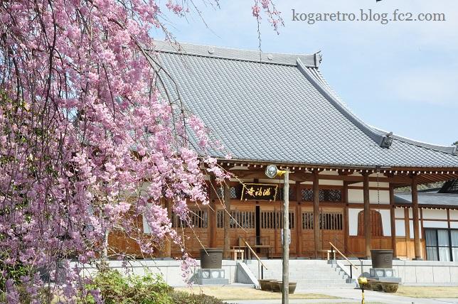 2016満福寺の桜5