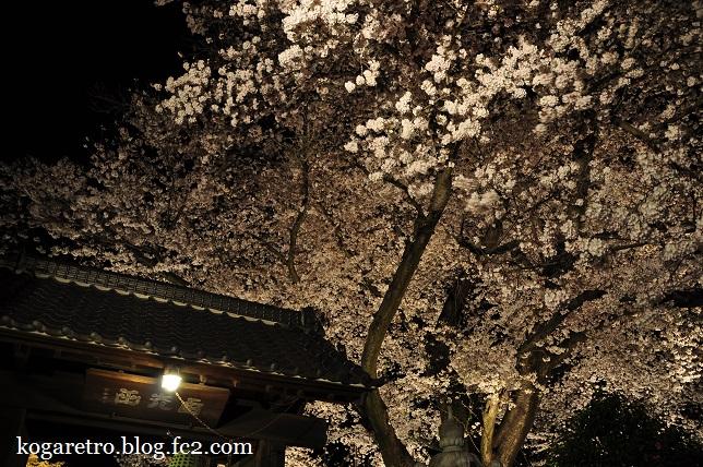 2016満福寺の夜桜4