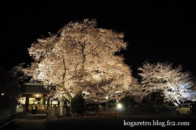 2016満福寺の夜桜