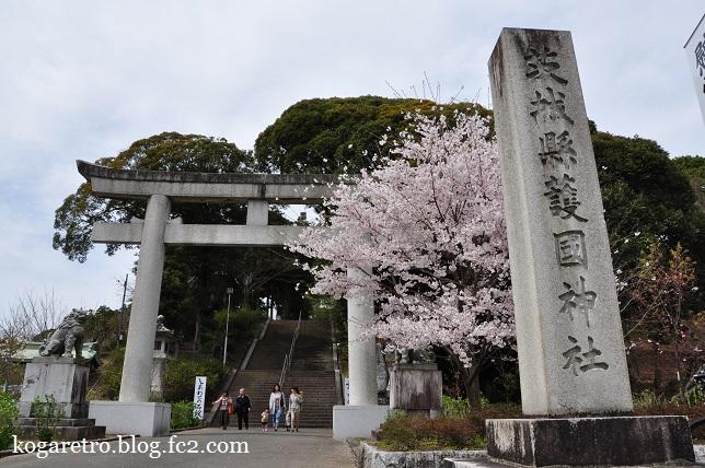 茨城県護国神社の桜