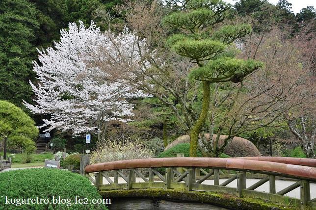 水戸偕楽園の桜5
