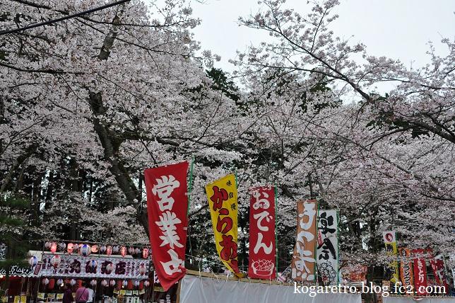 茨城県護国神社の桜5