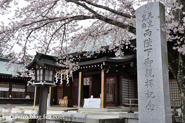 茨城県護国神社の桜2