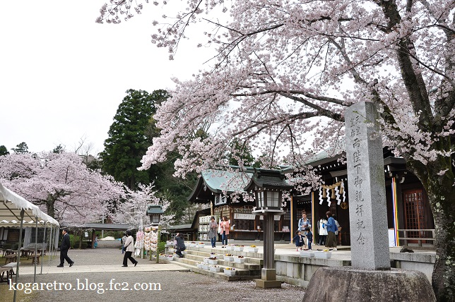 茨城県護国神社の桜4