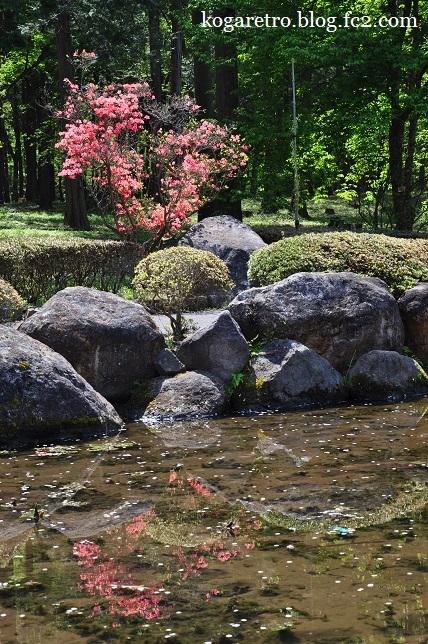 天平の丘公園の桜4
