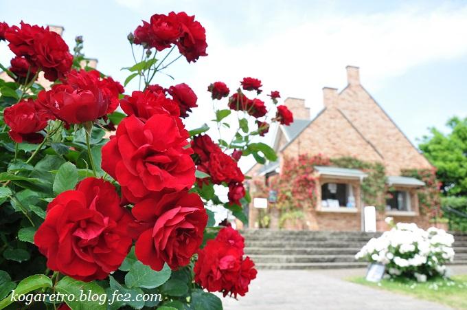 2016ザ・トレジャーガーデンのバラ