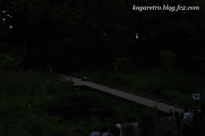 2016野木のホタル2