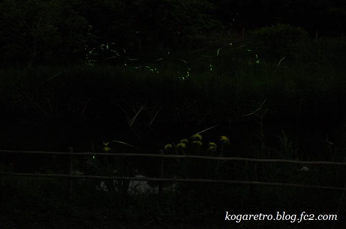 2016野木のホタル3