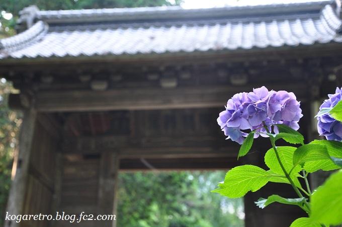 2016大中寺のあじさい2