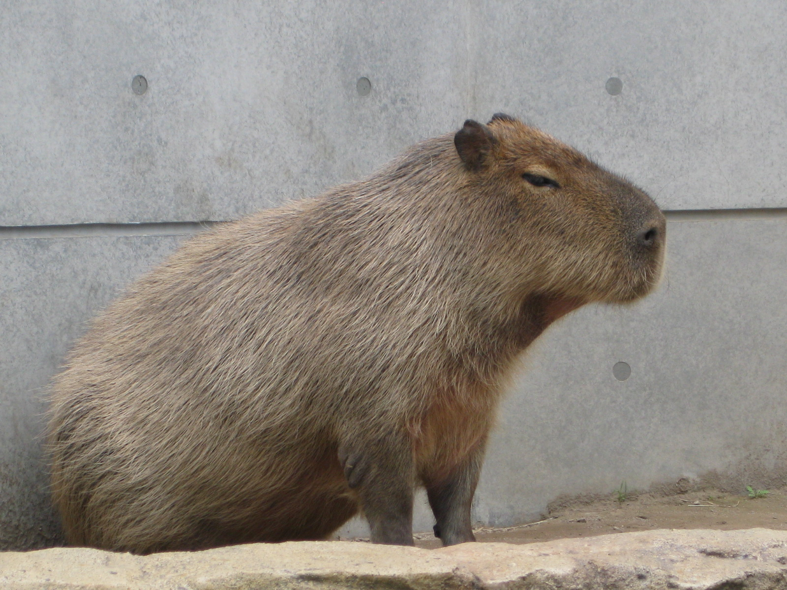 北海道・旭山動物園