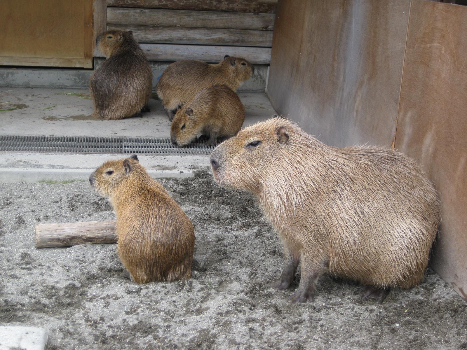 千葉・市川動物園①
