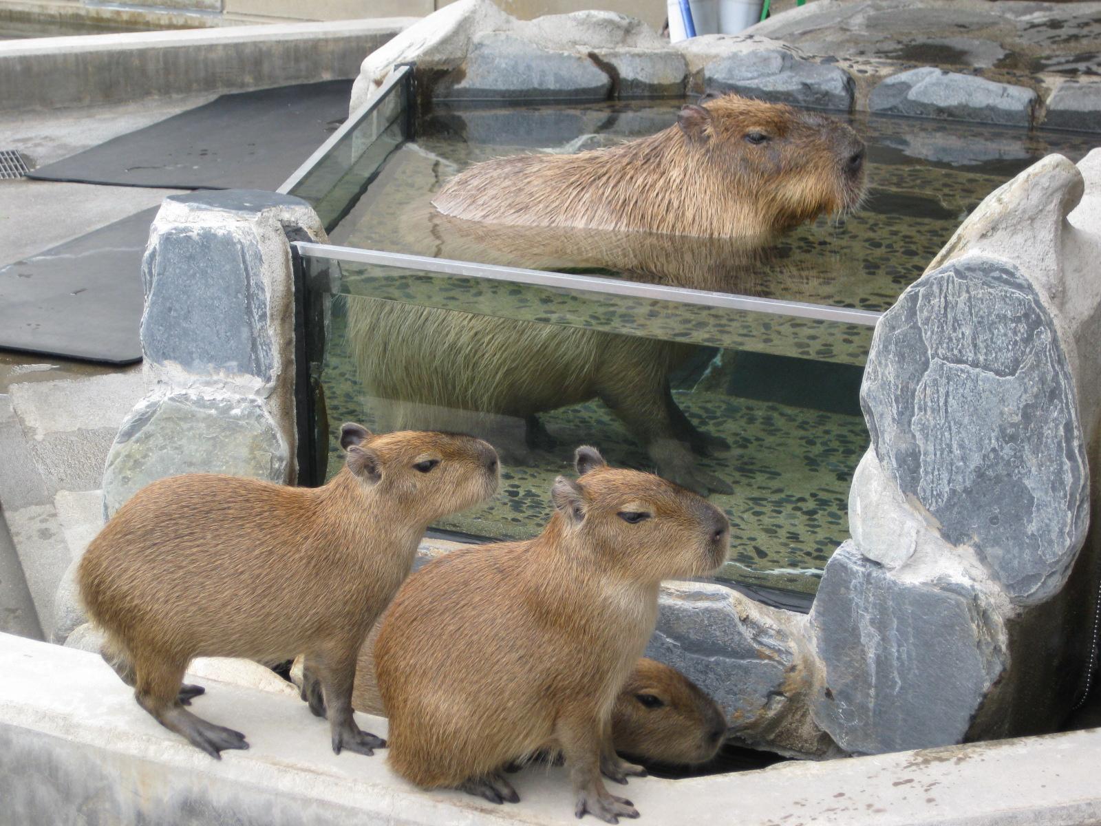 石川・いしかわ動物園⑤