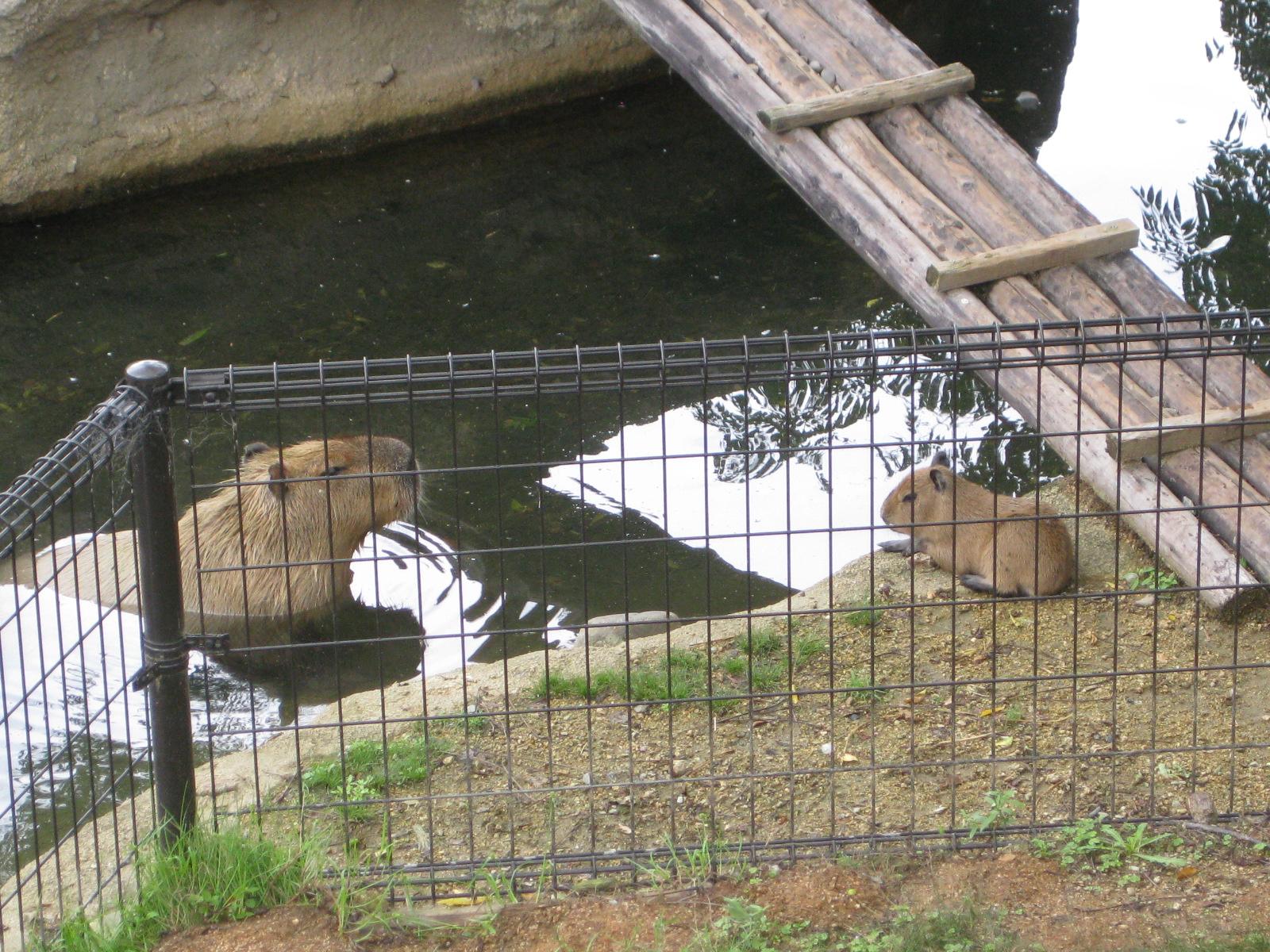徳島・とくしま動物園②