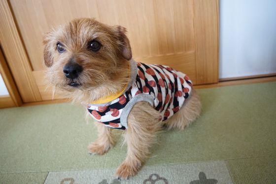 犬服 (3)