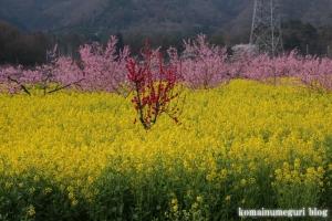 桃の花まつり5