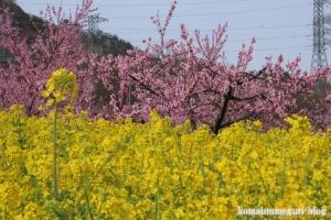 桃の花まつり11