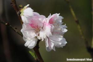 桃の花まつり18