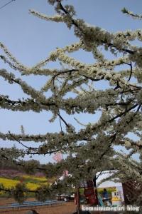 桃の花まつり9