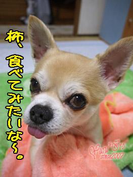 2016yuruiro_0614_k_003000