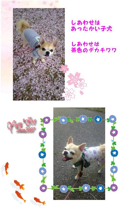2016yuruiro_0623_k_005