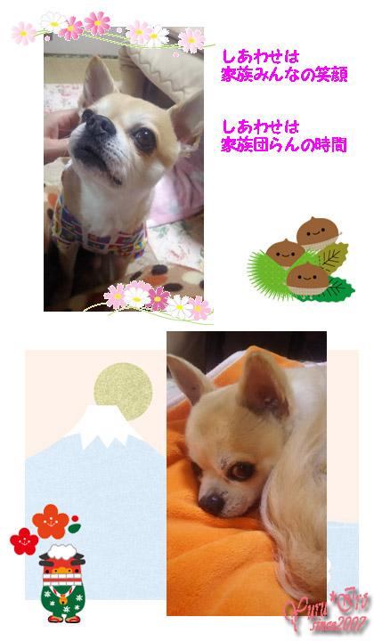 2016yuruiro_0623_k_006