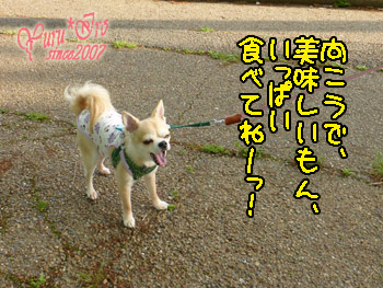 2016yuruiro_0512_k_003