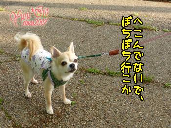 2016yuruiro_0512_k_004