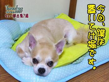 2016yuruiro_0701_k_000