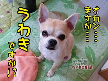 2016yuruiro_0702_k_007