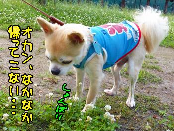 2016yuruiro_0702_kk_009