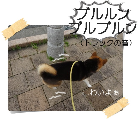 komaro20160408_2.jpg