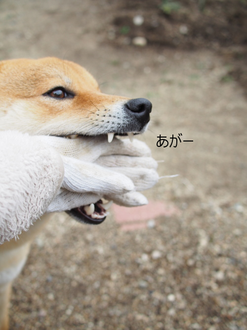 20160416-007.png