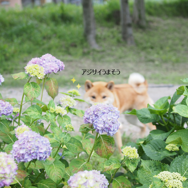 20160612-006.png