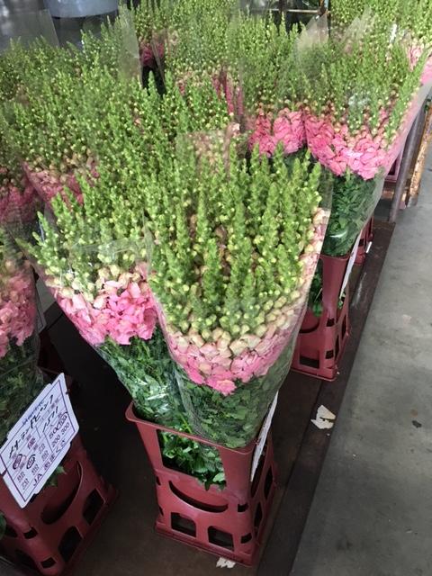 熊本の花2