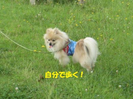 20160718_5.jpg