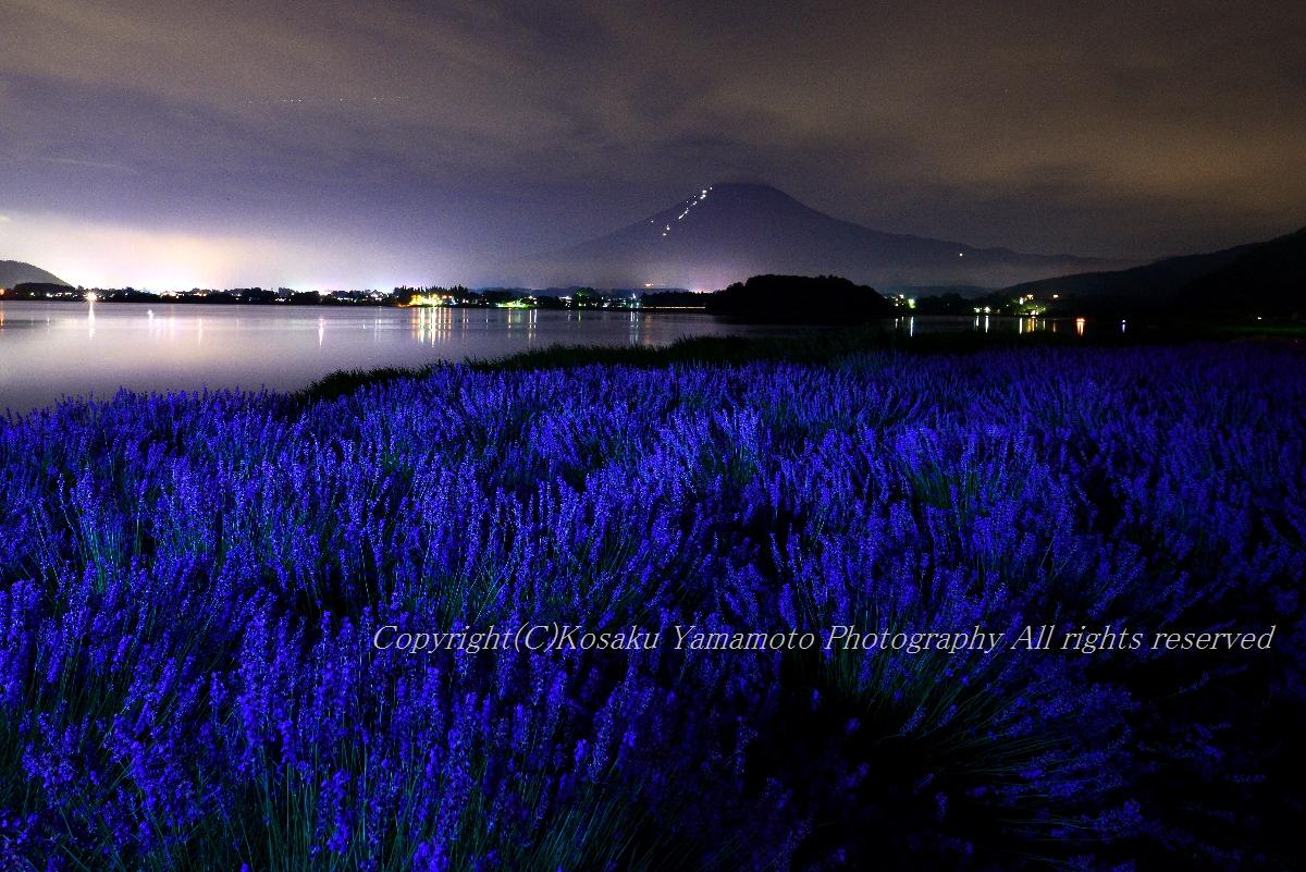 Midnight Lavender (河口湖)