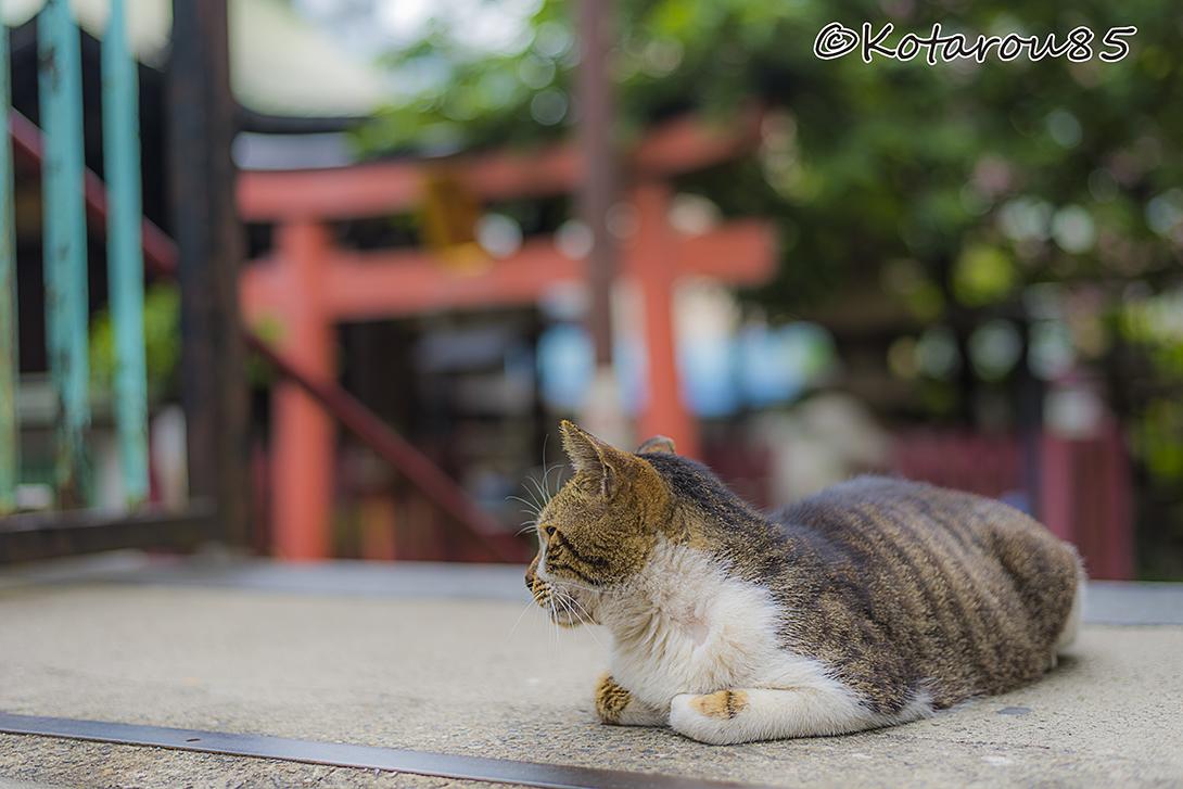 柳森神社の猫4 20160526