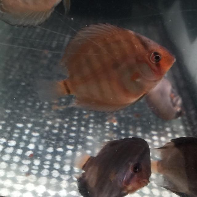 20160426OJWS稚魚病気