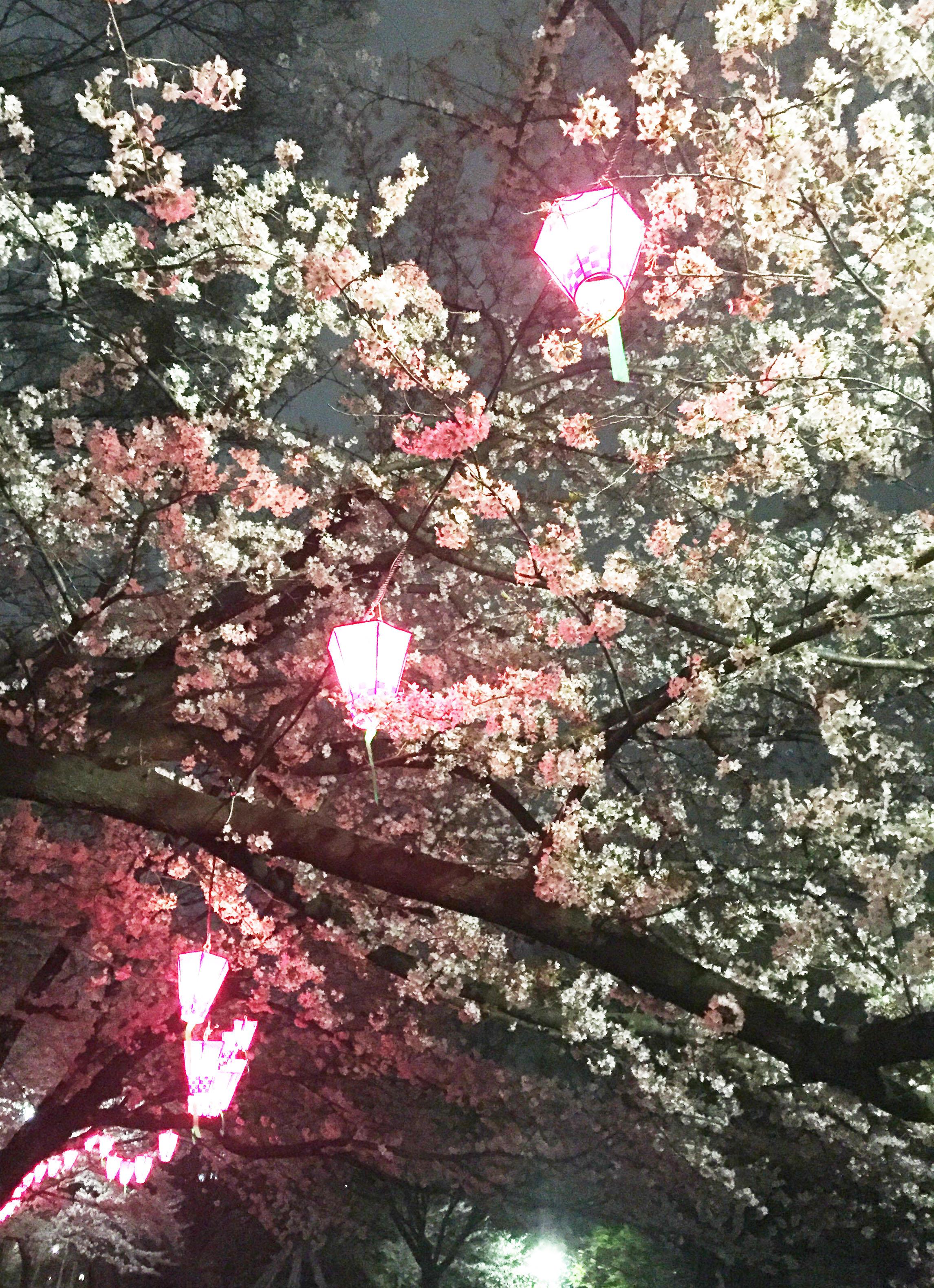 160408夜桜03