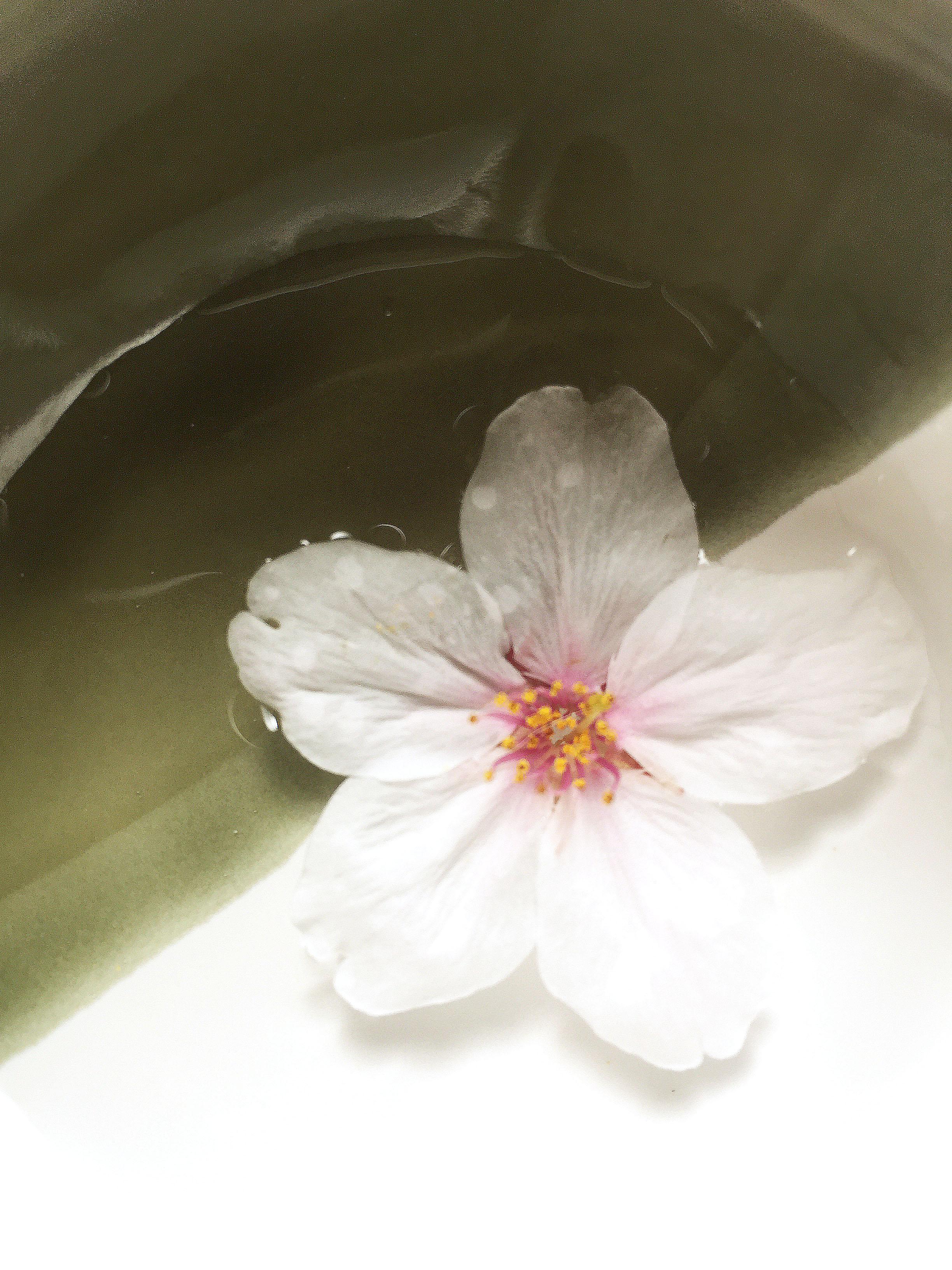 160415桜花