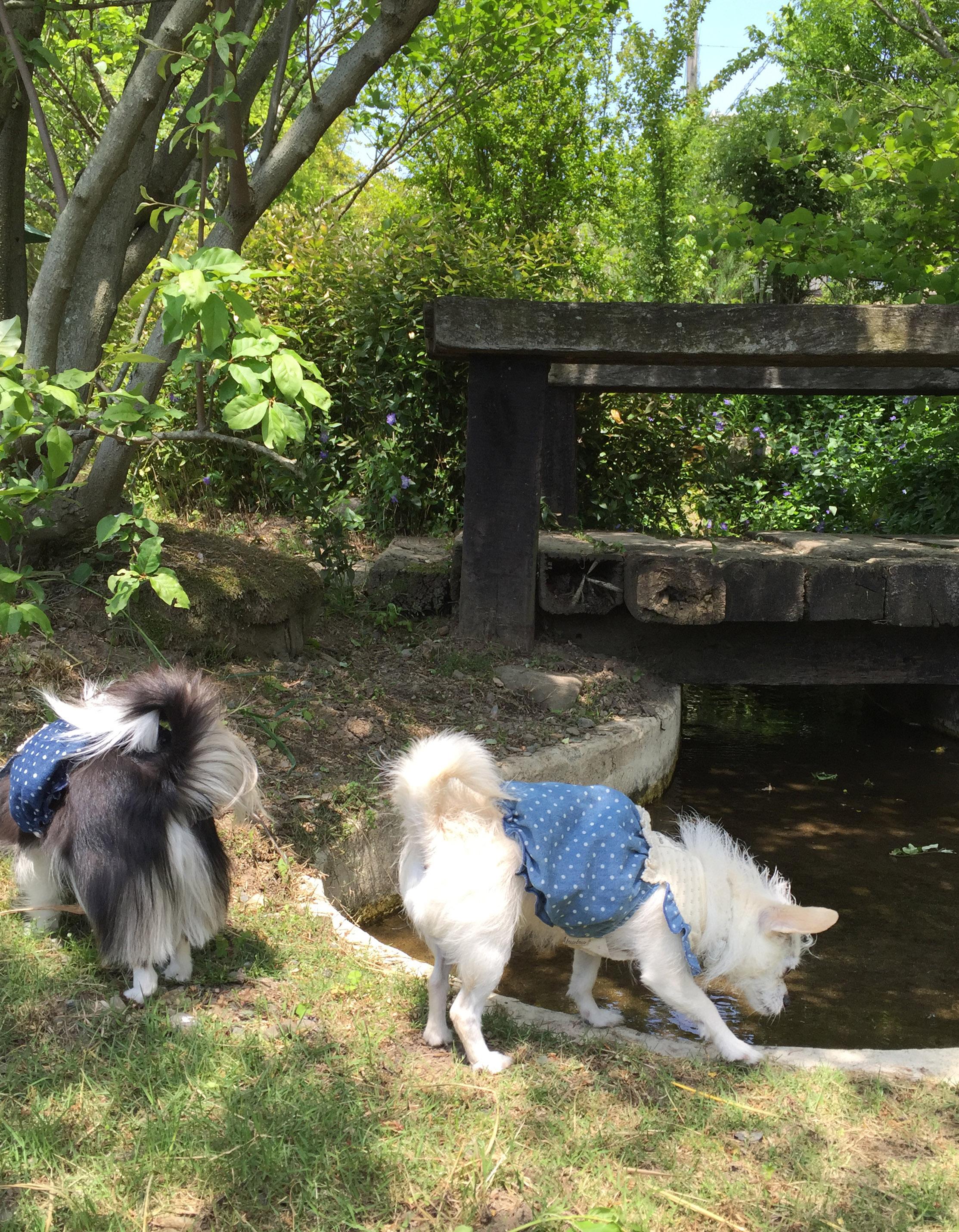 160513姉妹と池