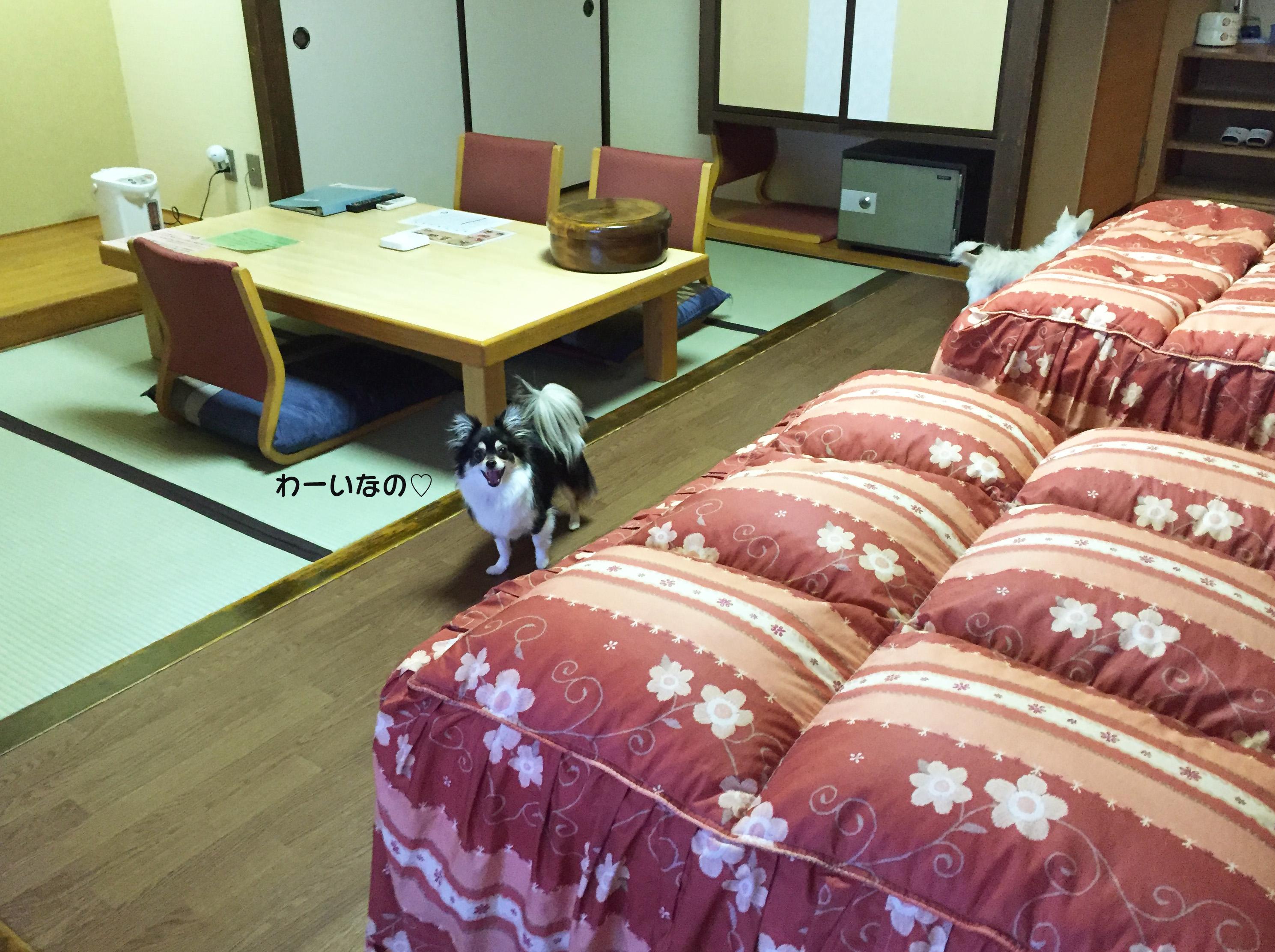 160611室内02