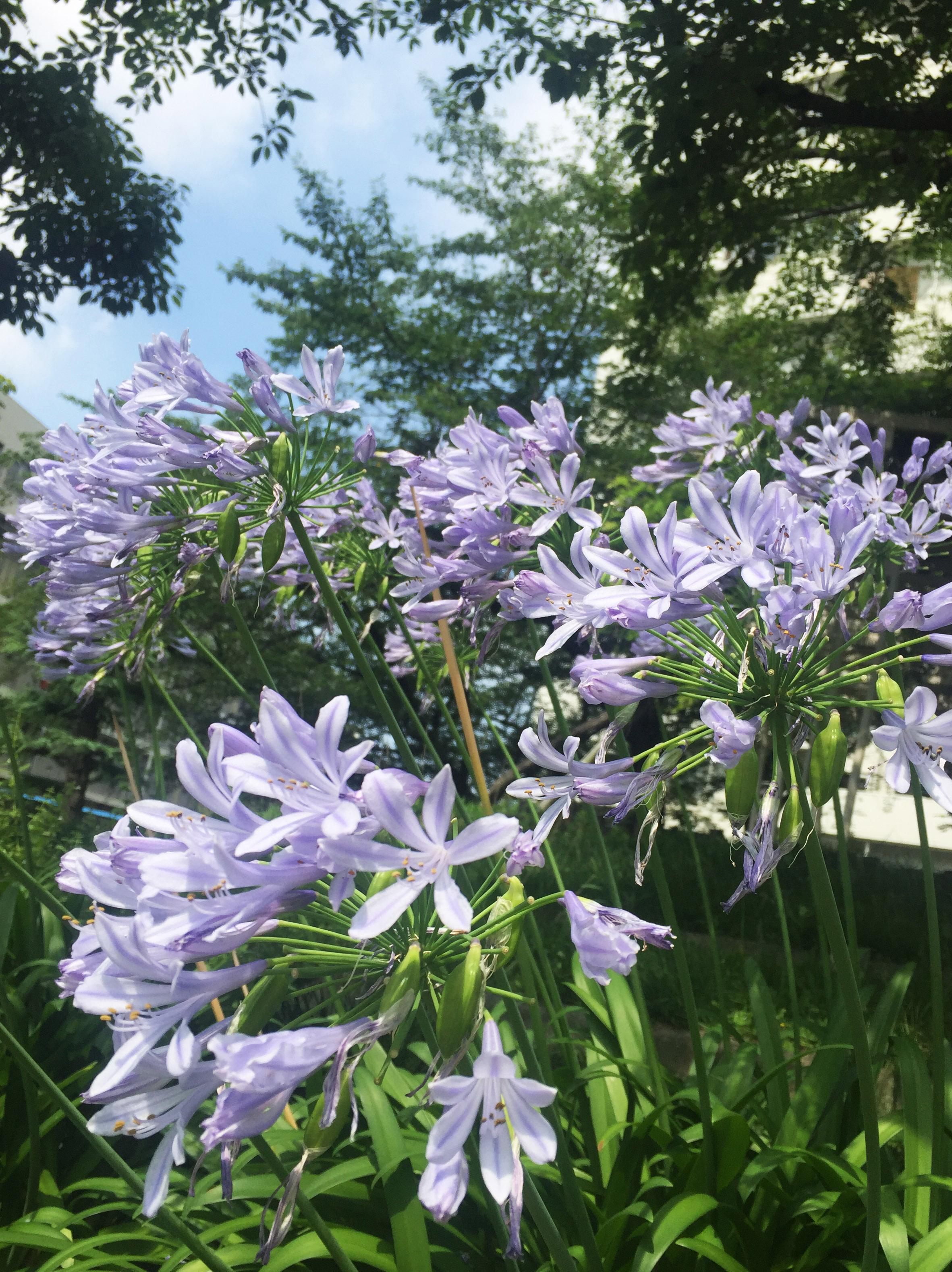 160707花