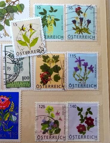 オーストリア花