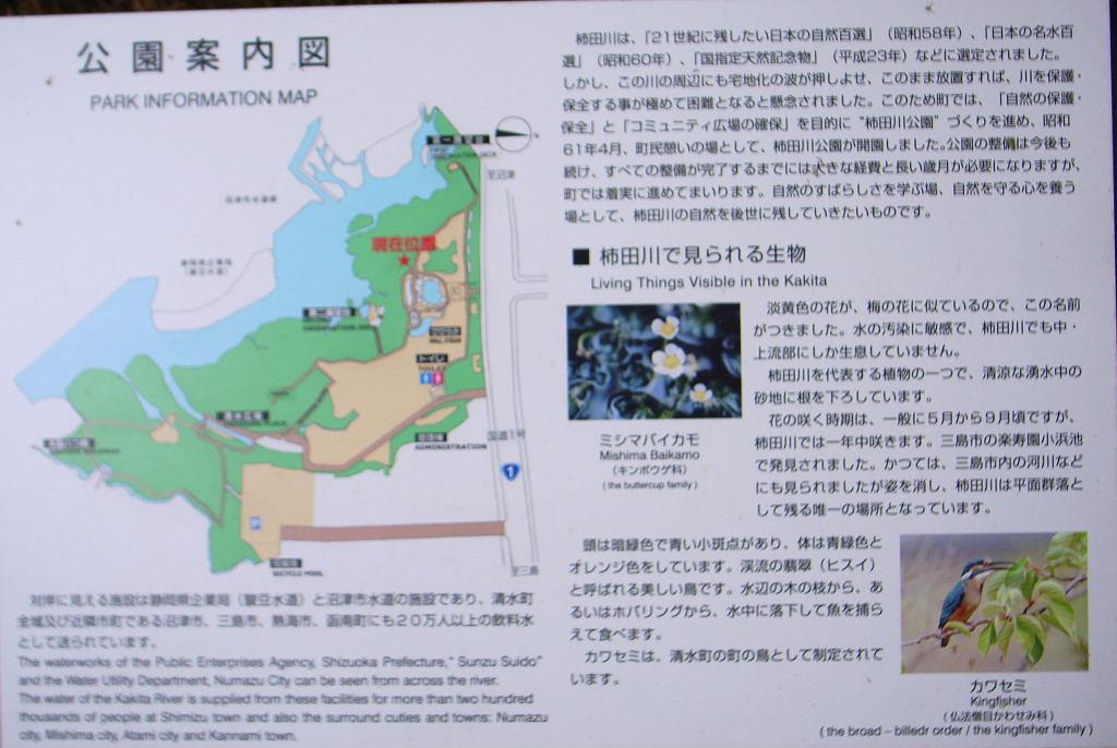 柿田川 (3)