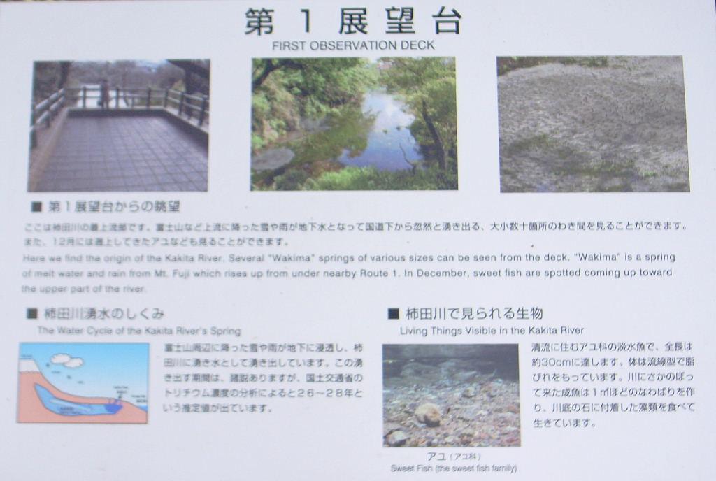 柿田川 (4)