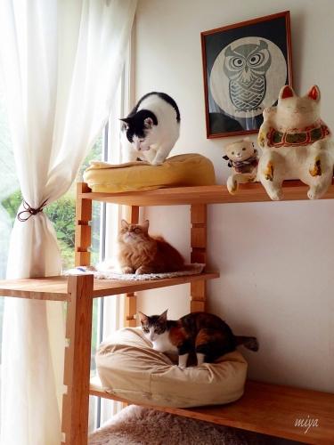 猫3段P6290200